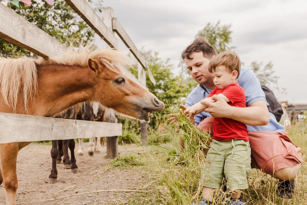 Niño con su padre, alimentando a un poni a través de una vaya de madera
